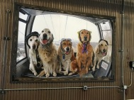 Gondola dogs (pic of a pic)