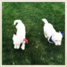 Gracie and Gibs in a blur.