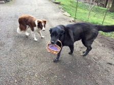 Rusty and Luke find Easter eggs.