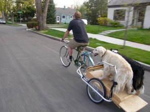 Doesn't everyone take their dogs on bike rides?!