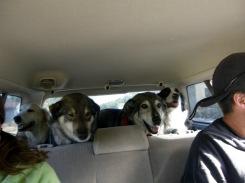The OG dog squad.