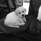 Baby Wilson
