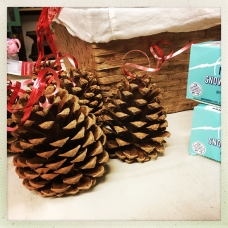 Perfect pinecones from McCall, where the capitol Christmas tree is from!