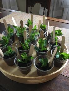 Seedlings...for dessert!