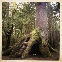 this tree!