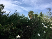 Flora galora
