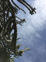 cacti sky